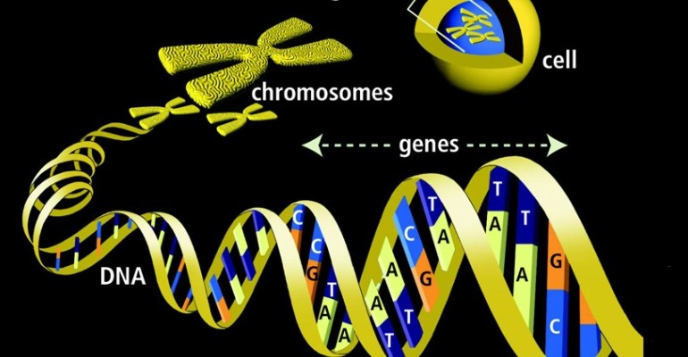 DNA-genes-radio-controlled-
