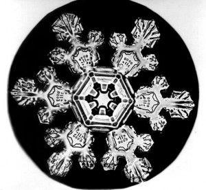 A nova teoria compara a física da estruturação de organismos vivos à da formação de diversas outras formas na natureza. Um floco de neve (acima) é um exemplo de arquitetura guiada pela dissipação de energia. Imagem: Wilson Bentley