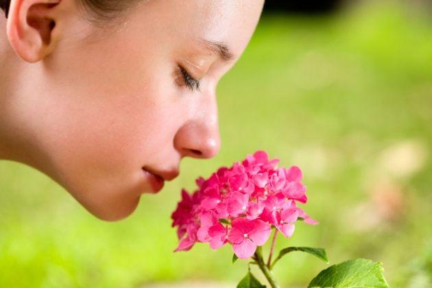 Um típico nariz humano possui cerca de 400 tipos de receptores olfativos, e pode diferenciar até 1 trilhão de cheiros. Crédito: Richard Green/Alamy