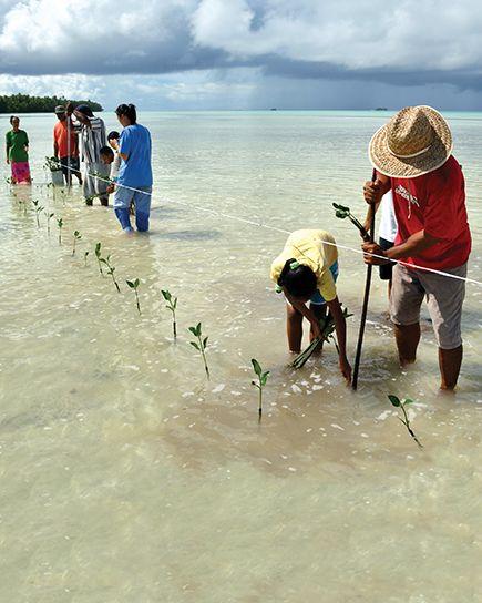 Projeto estudantil de Funafala, Tuvalu, no qual estudantes plantam vegetação típica de manguezais, cujo objetivo é o de estabilização costeira. A nação polinésia tende a sofrer com o aumento do nível do mar. Crédito: David J. Wilson