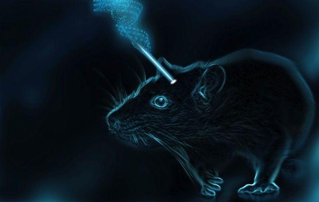 Memória ioiô: cientistas obtiveram êxito no controle do fortalecimento e enfraquecimento das conexões entre neurônios dos cérebros de ratos, provocando, respectivamente, a formação e o esquecimento de uma memória — usando a luz. Imagem: Sadegh Nabavi e Sina Alizadeh