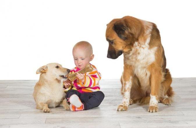 O ciúme é um elemento presente nas relações sociais dos cães, sugere uma nova pesquisa. Imagem: Shutterstock