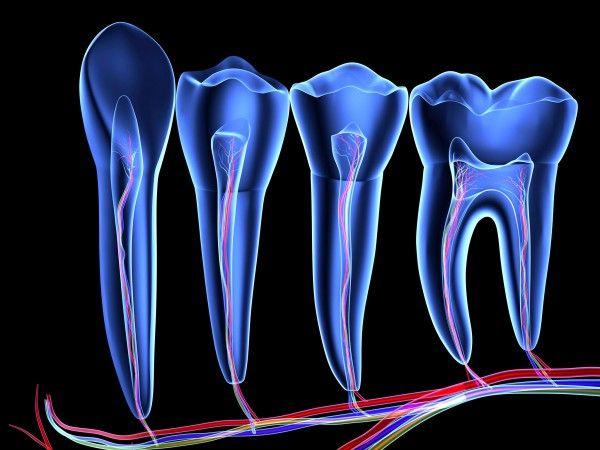 Pesquisadores descobriram que um determinado tipo de células-tronco pode se originar no interior dos dentes, a partir de células nervosas. Imagem: Pasieka; Science Photo Library; Corbis