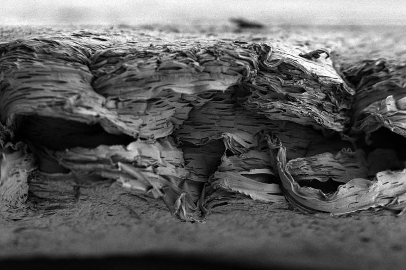 Micrografia eletrônica de varredura de uma estrutura porosa biodegradável desenvolvida por pesquisadores do MIT. Sobre essa membrana são fixadas diversas camadas de fatores de crescimento capazes de promover a regeneração óssea. Crédito: Nasim Hyder e Nisarg Shah