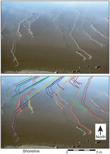 Vista dos rastros deixados no solo do lago pelas pedras em dezembro de 2013. Crédito: Richard D. Norris; James M. Norris; Ralph D. Lorenz; Jib Ray; Brian Jackson; PLOS ONE