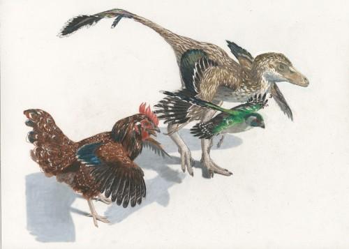 Um novo estudo afirma que, no início, a evolução das aves foi muito lenta, embora sua velocidade tenha aumentado enormemente em um momento posterior. Imagem: Jason Brougham
