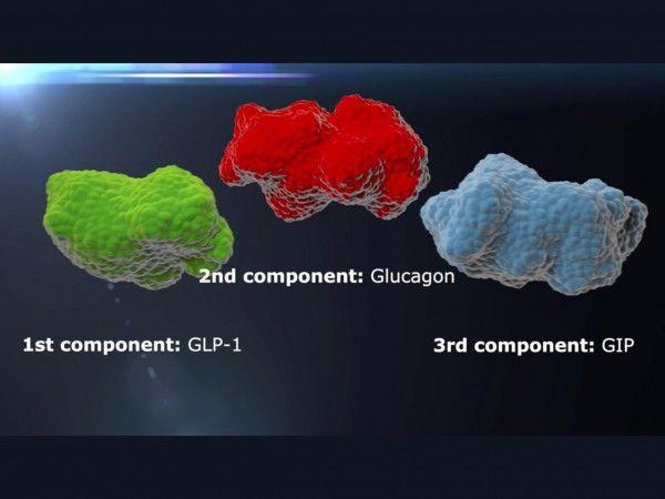 3-em-1: nova droga contra a obesidade é composta pela estrutura de três hormônios que agem sobre o controle da glicose no sangue e da gordura corporal: peptídeo-1 semelhante ao glucagon (esq.), glucagon (centro) e peptídeo inibidor gástrico (dir). Crédito: Brian Finan e Matthias Tschöp