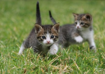gato pequeno