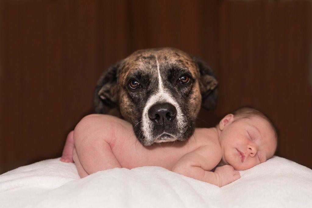 dog 1718242 TN ano do cão, fotografia, Huawei