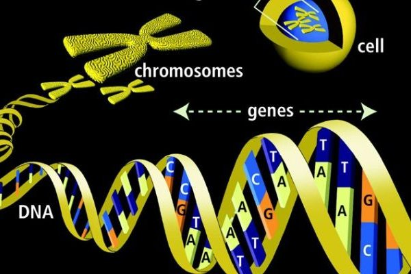 DNA genes radio controlled