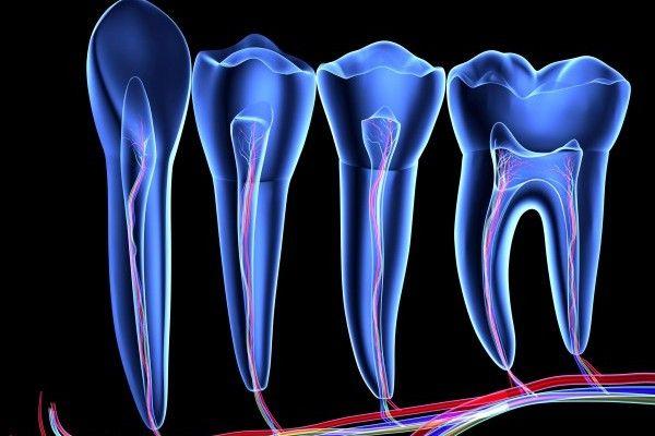 Dentes 2 células-tronco