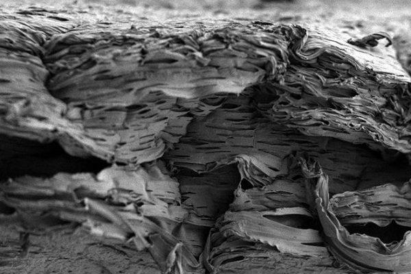 Andaime biodegradável 2