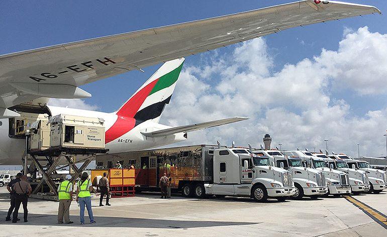 Emirates SkyCargo transporta perto de 100 cavalos de salto por 3 continentes