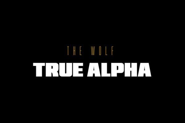 Cibersegurança: HP anuncia The Wolf: True Alpha