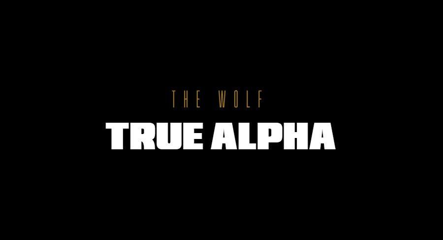Cibersegurança: HP anuncia The Wolf: True Alpha