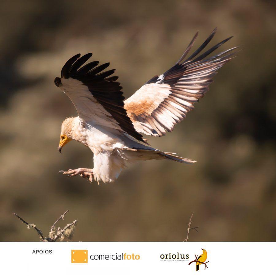 Sigma dou redes 03 aves, Douro Internacional, fotografia, natureza, Parque Natural Douro Internacional, SIGMA, Sigma Portugal, vida selvagem, Workshop