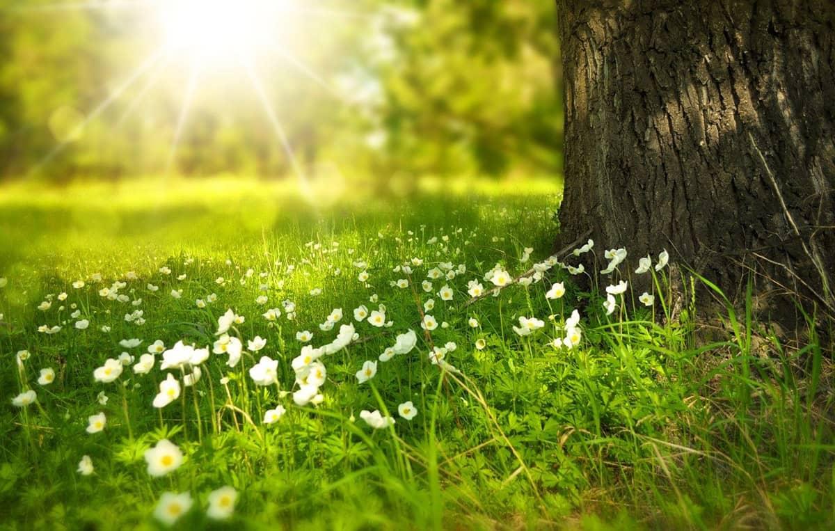 HP natureza 1 alterações climáticas, hp, proteção do ambiente