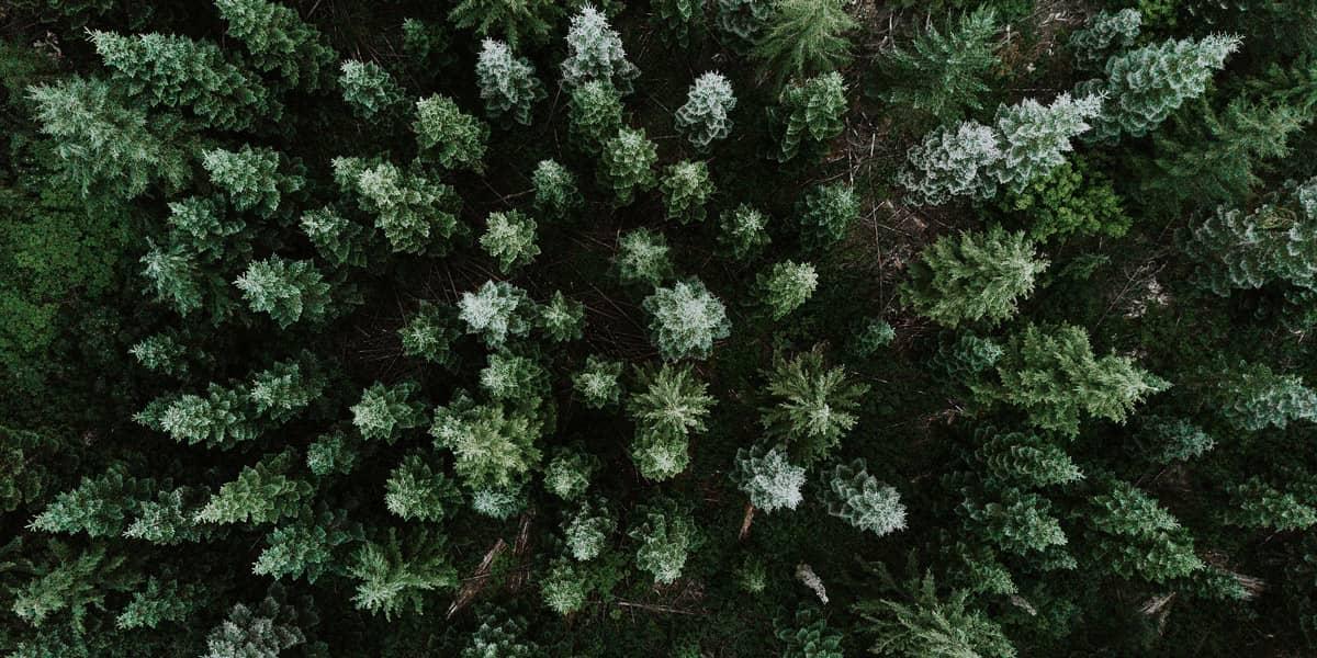 HP Proteção do ambiente - Florestas